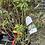 Thumbnail: Strawberry Sundae Hydrangea - $9.50