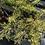 Thumbnail: Juniper Sea Green - 50% off
