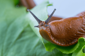 Slug_For Web.png