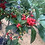 Thumbnail: Winterberry 'Winter Red'