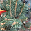 Thumbnail: Hermann Naue Colorado Spruce