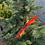 Thumbnail: Spruce Trees - 50% off
