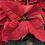 Thumbnail: Poinsettia with Glitter