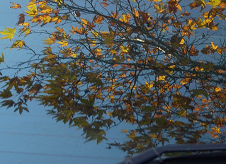 AUTUMN LEAVES DAMAGE CAR PAINT: WHAT TO DO ABOUT IT