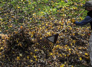 RAKE VS. LEAF BLOWER: THE BRASS TACKS OF FALL CLEANUP