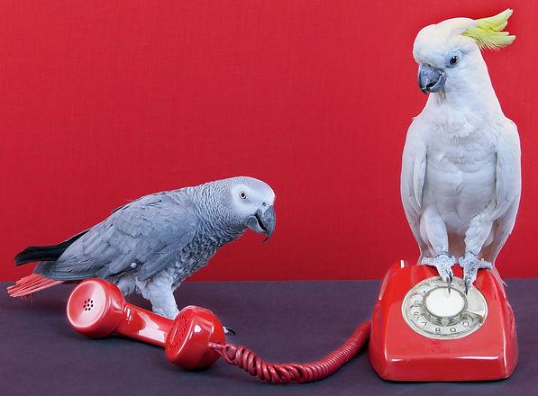 BirdPhone.jpg