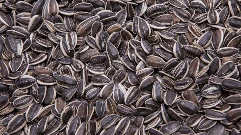 Sunflower Seed- Stripe Large