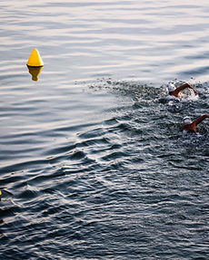 Open water swimming event in town.jpg