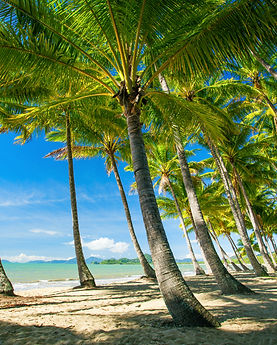Palm trees on the beach of Palm Cove in