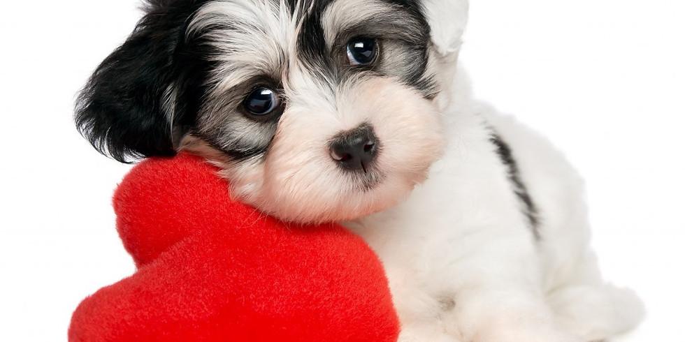 Valentine's Day Dog Photos
