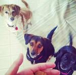 Phoebe, Pepper & Bella