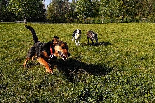 3 Dogs Bark & Run Membership