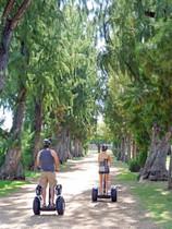Kapiolani Park Ironwood Alley