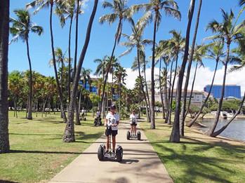 Explore through palm tree groves