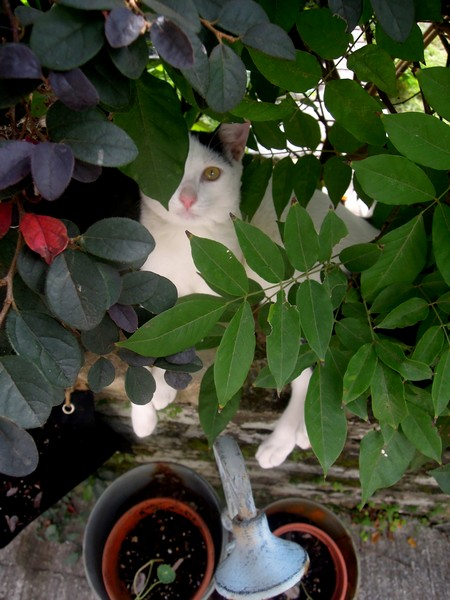 Neichoi the garden cat