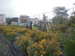 Corporate training at TLG Organic farm