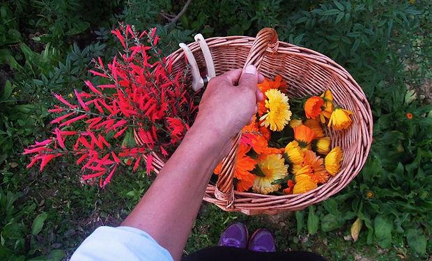 170227_a basket of edible flower.jpg