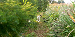 Neichoi the cat running in the farm