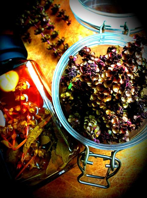 Time to make Basil seeds vinegar│羅勒種子醋