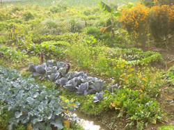 thelittlegardenfarm
