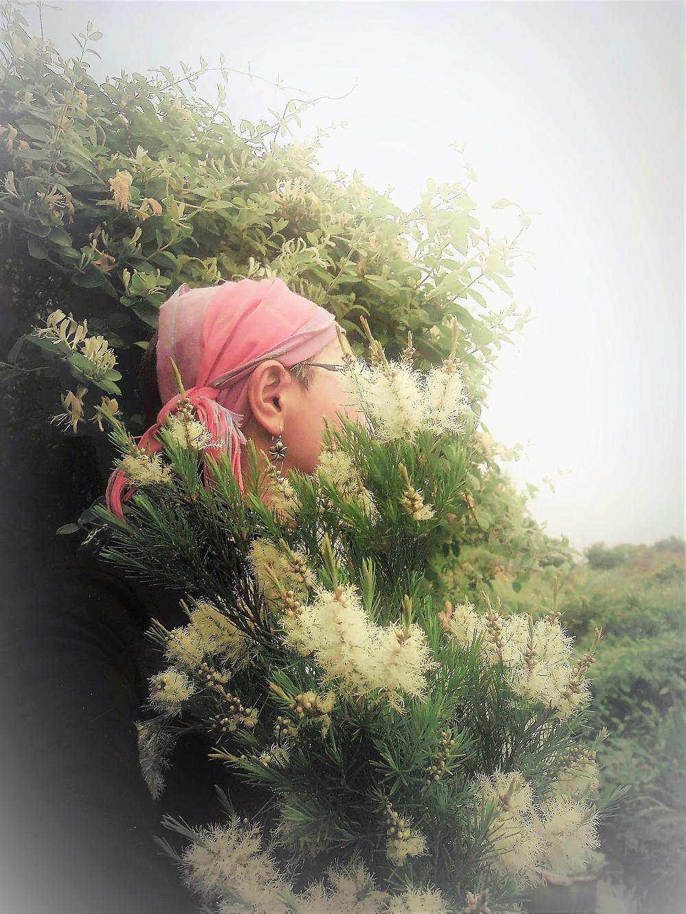 Cynthia harvested Australian Tea Tree
