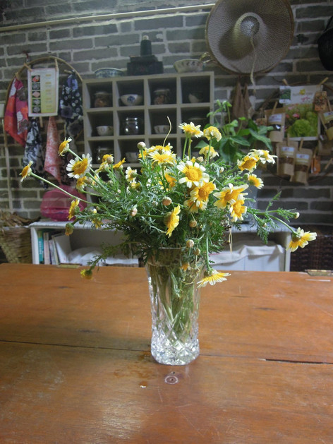 農場美學練習:春菊蓎蒿切花
