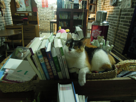 Little Memories : The most adorable cat in ST-154