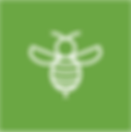 KAP-Icon-Bee.png