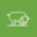 KAP-Icon-Pig.png