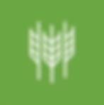 KAP-Icon-Wheat.png