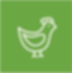 KAP-Icon-Bird.png