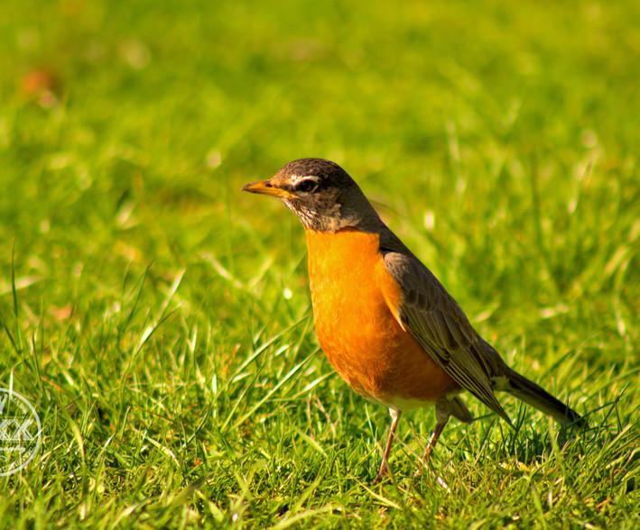 birdonriverside1.jpg