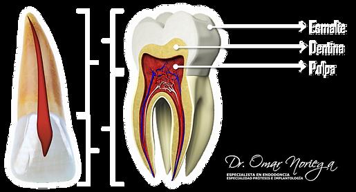 3 dental anatomy antomia dental dr jesus