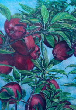Corinne Dodge Apples