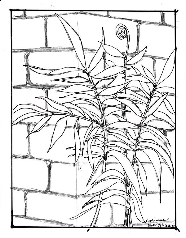 Corinne Dodge Fern Coloring Page.jpg