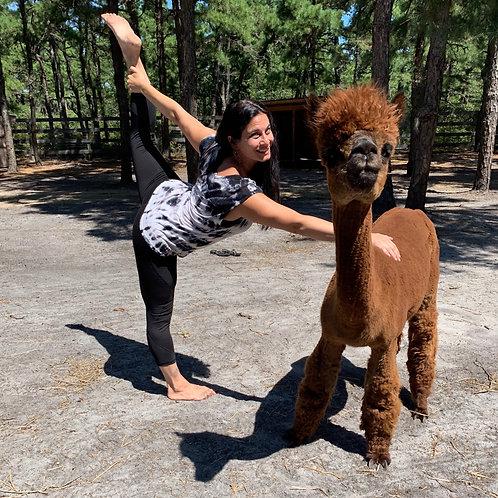 Alpaca Yoga Class - Sunday 11/17, 11am-1pm