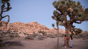 Joshua Tree shoot, California