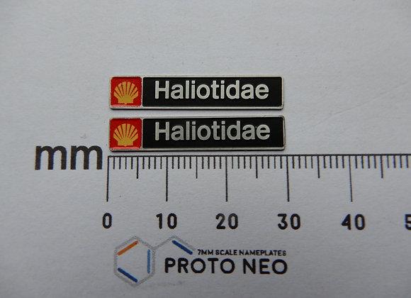 47196 Haliotidae