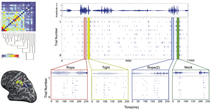 Decoding language from neural activity