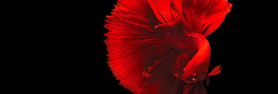 LUXframe světelný obraz 96 x 60 cm