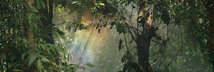 LUXframe světelný obraz 61 x 40cm