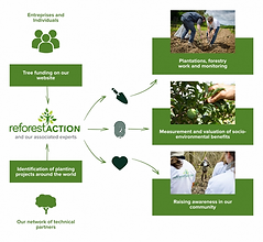 reforestaction_functioning_.webp