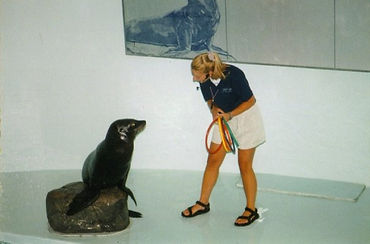 Clicks Dog Training_AboutMe_Sealion