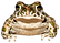 frog-2992956_1920.png