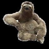 50-502752_transparent-sloths-background_