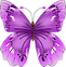 butterfly-154673_1280.png