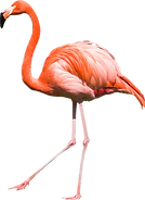 transparent-flamingo-12.png