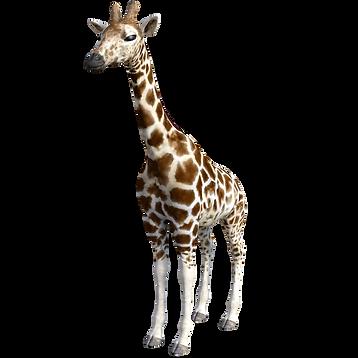giraffe-3953980_1920.png