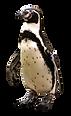 penguin-2691407_1920.png