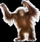 monkey-png-transparent-13.png